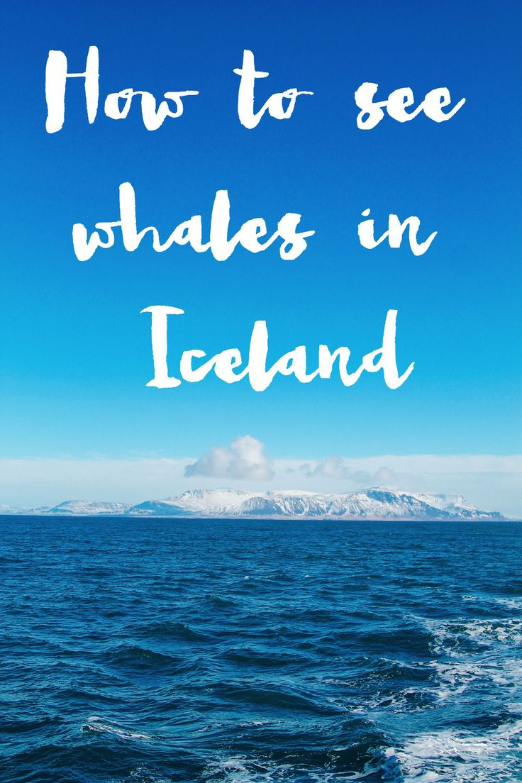 Here's How To See Whales (And Dolphins) In Iceland! - Hand Luggage Only - Travel, Food & Home Blog