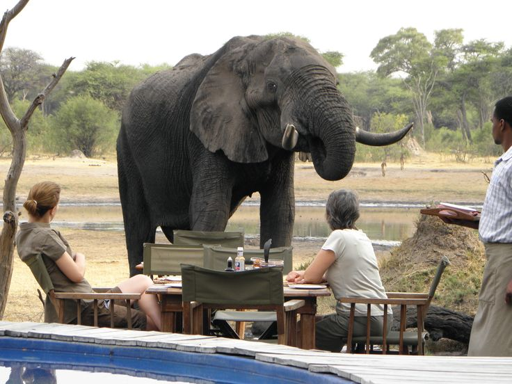 Breakfast visitor at The Hide, Hwange National Park.  Read more about this luxurious Zimbabwe lodge: http://www.go2africa.com/accommodation/7860/at-a-glance/the-hide