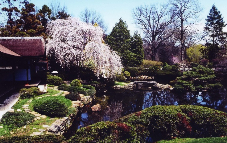 At the Shofuso #Japanese House and Garden, one of the most beautiful spots  in #Philadelphia - stop by and see it during the Cherry Blossom Festival