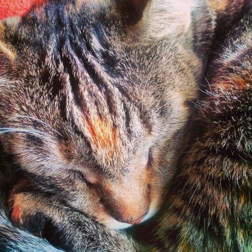 If only something cutter could exist  A sleeping cat - Grisette