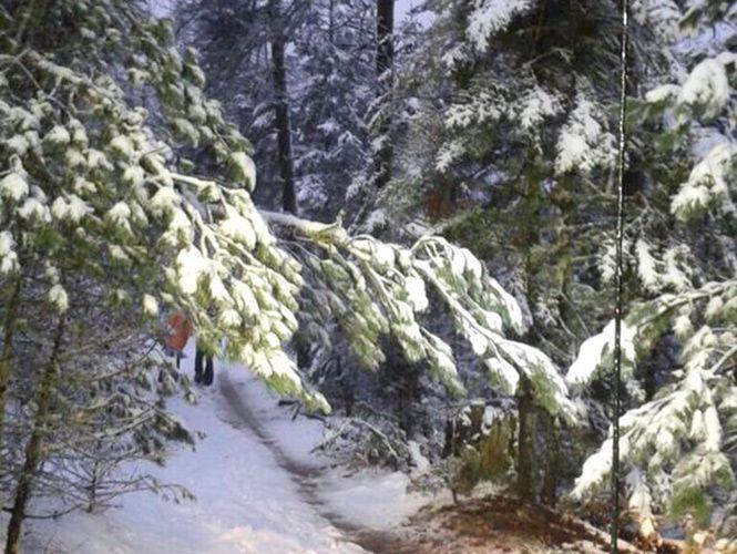 Reportan caída de nieve en Arteaga, Coahuila