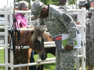 Horses that suffer from abuse, medical conditions, neglect, or old age have important purpose. Organizations like Horses Healing Heroes have created programs centered around Equine Assisted Psychotherapy.