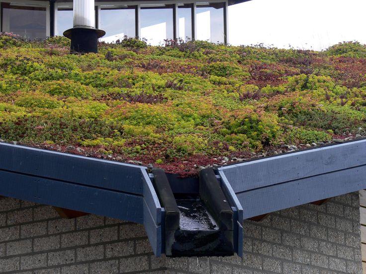 17 Best Ideas About Extensive Dachbegrünung On Pinterest ... Intensive Extensive Dachbegrunung Nachhaltig