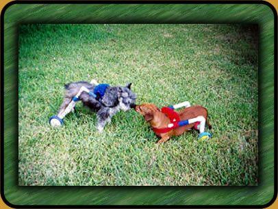 "Коляска из ПВХ для собак инвалидов Mary & Penny in Their Original ""Dogs To Go"" Carts."