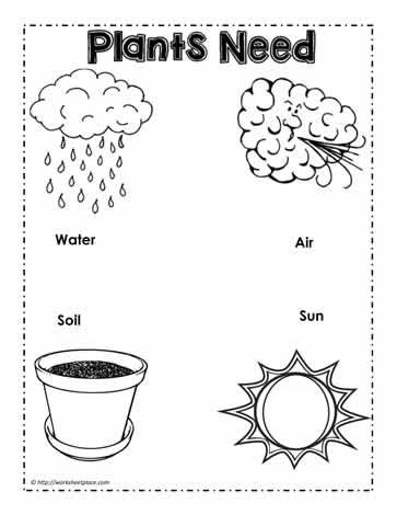 image result for image of needs of plants kindergarten. Black Bedroom Furniture Sets. Home Design Ideas
