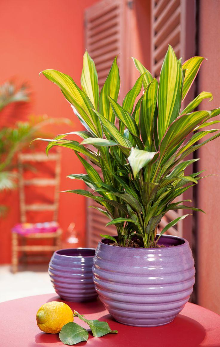 132 best images about truffaut plantes d 39 int rieur on for Plante truffaut