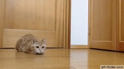 Cat is a great goal keeper | Gif Finder – Find and Share funny animated gifs