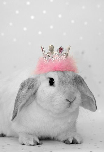 Lop Rabbit *Whisper* by The Shabby Bunny, via Flickr