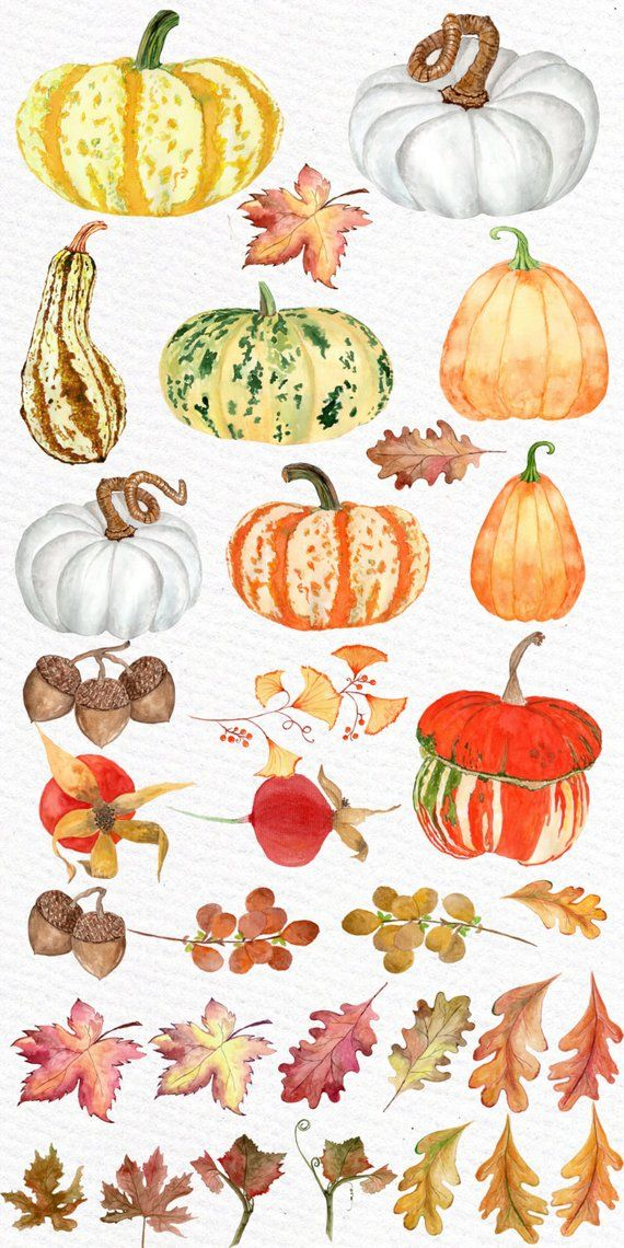 Watercolor Pumpkin Clipart Autumn Clipart Fall Clipart Autumn