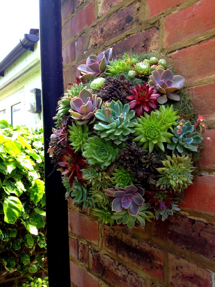 9 best images about hanging plants for brick wall on for Hanging wall garden