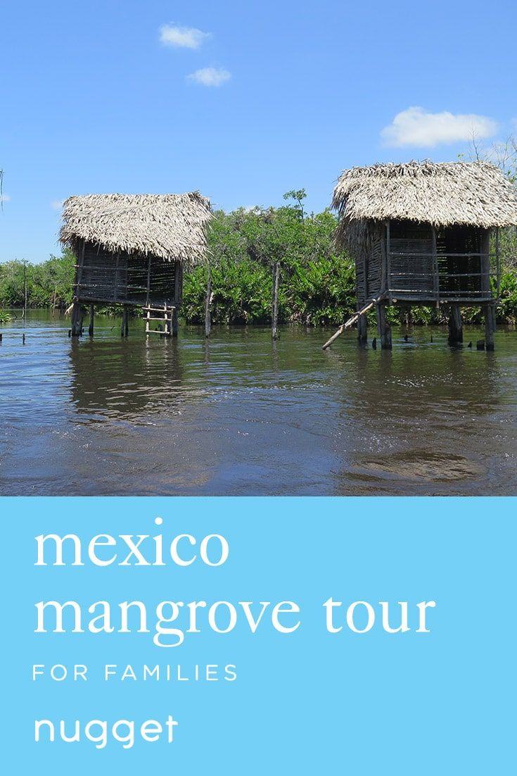 Looking for an easy Mexico kids adventure? This mangrove crocodile tour itinerary is perfect for kids. Pick up some delicious banana bread on the way!