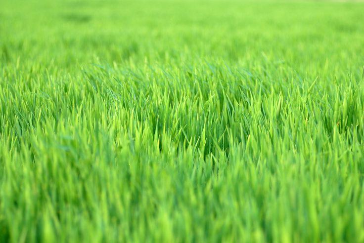 Vertikutieren, aerifizieren und besanden – Verordnen Sie Ihrem Rasen eine Auffrischungskur