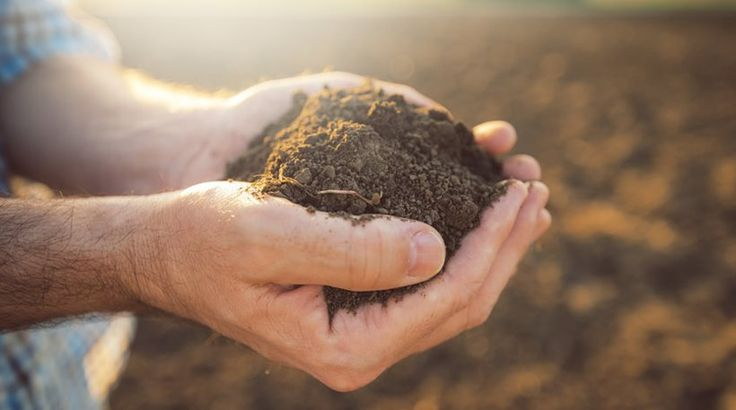 Τι ζει πιο συχνά στο χώμα και στη σκόνη που πατάμε; Τι αποκαλύπτουν οι επιστήμονες