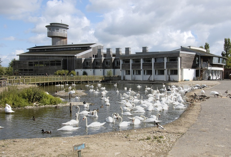 Slimbridge Wildfowl Trust