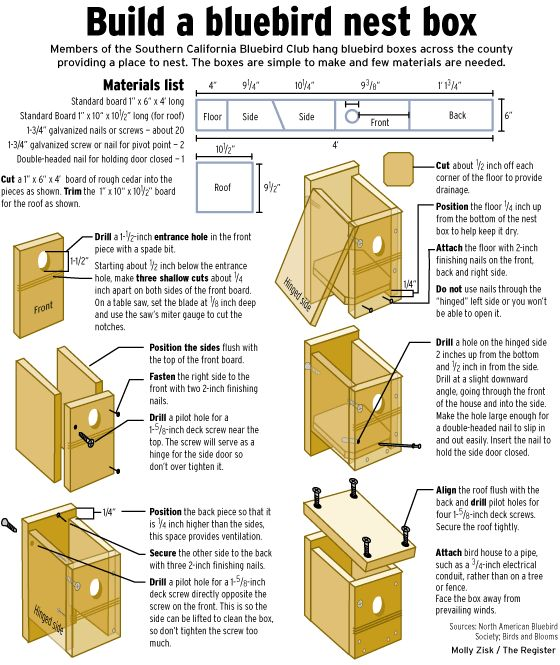 The care and breeding of bluebirds | bluebirds, bluebird, purvis Molly Zisk how to build a bluebird box for nesting - Life - The Orange County Register