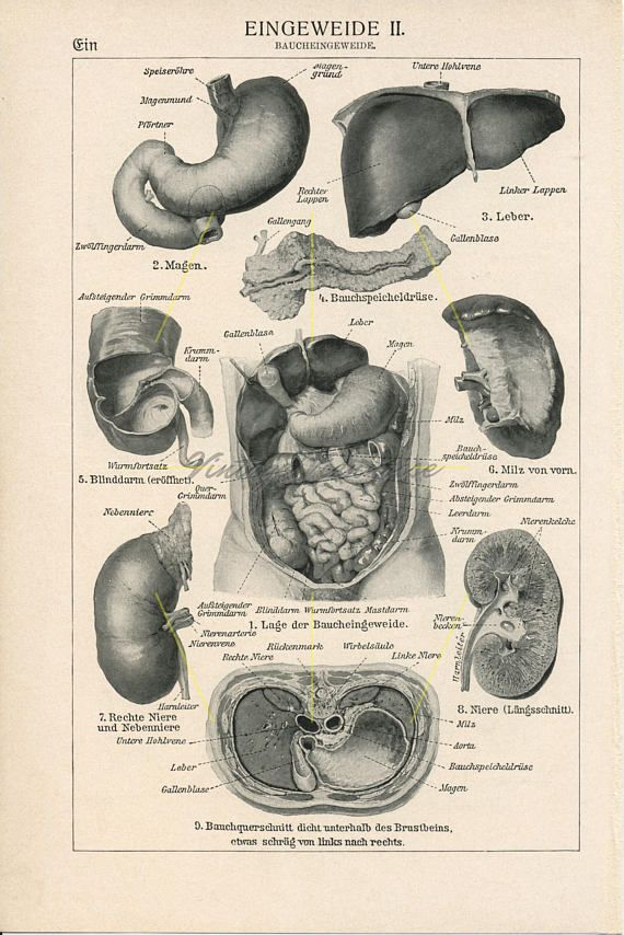 26 best Anatomy & physiology images on Pinterest | Antique prints ...