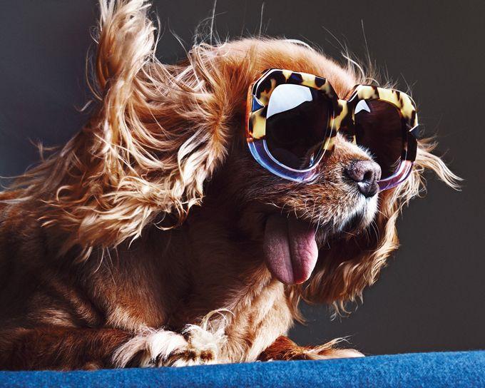 Картинки днем, смешная картинка собаки в очках