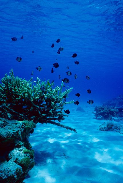 Would love to swim with the fish. We've done that in Haiti and off the Catalina Islands. So fun!