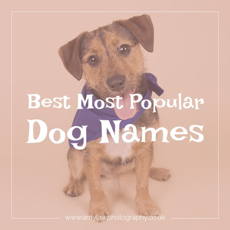 Dog life: Best Most popular dog names male and female dog names what to call your puppy and dog what to name your puppy and dog