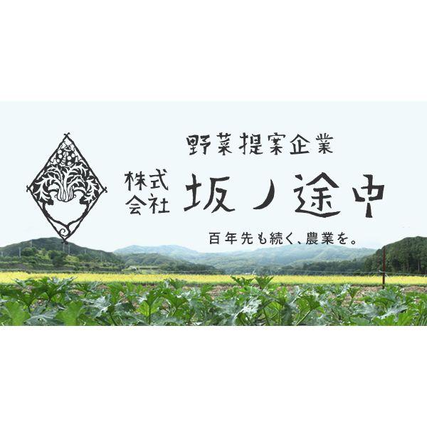 「野菜提案企業」(株)坂ノ途中。京都を拠点に、無農薬・無化学肥料・有機栽培など、環境負荷の小さい農業を営む人を増やすことで農業を持続可能なものへ!