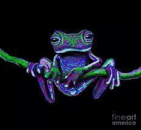 Frog                                                                                                                                                      More