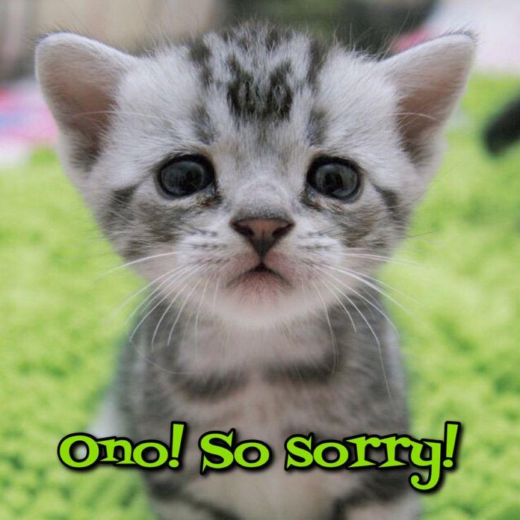 Sorry Sad Cat | www.pixshark.com - Images Galleries With A ...