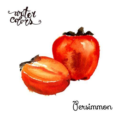 Watercolor persimmon