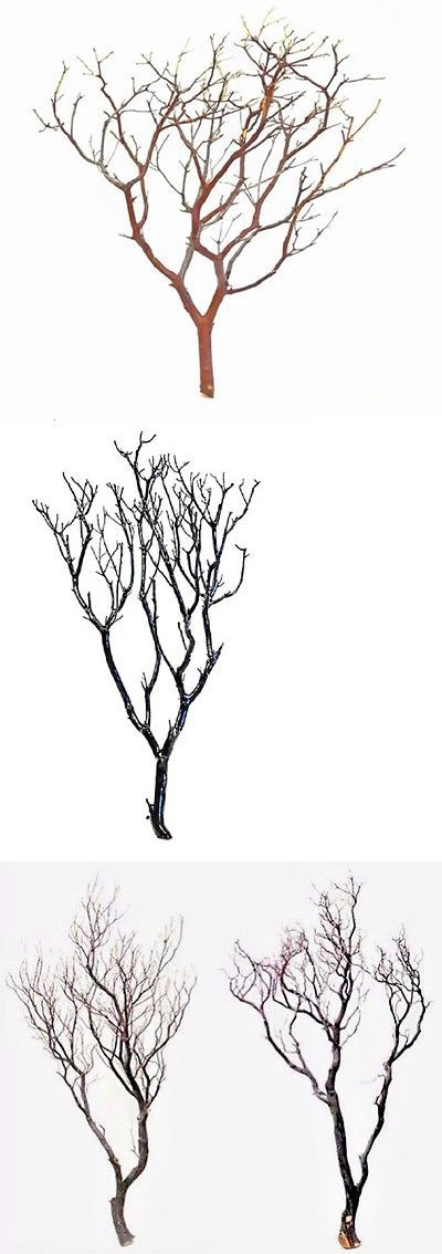 Centerpieces and Table D cor 159928: 15 Full 20 Manzanita Branches For Centerpieces Or Wishing Trees For Wedding -> BUY IT NOW ONLY: $69.99 on eBay!