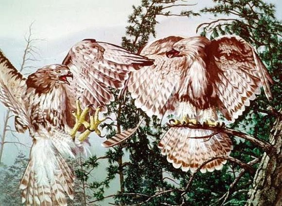 Pair of Eagles Optical Illusion - http://www.moillusions.com/pair-eagles-optical-illusion/