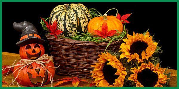 Es ist Oktober, die Zeit des Kürbis. Ob als Speisekürbis oder in Form von Kernöl, der Kürbis gewinnt im ökologischen und konventionellen Anbau an Bedeutung.