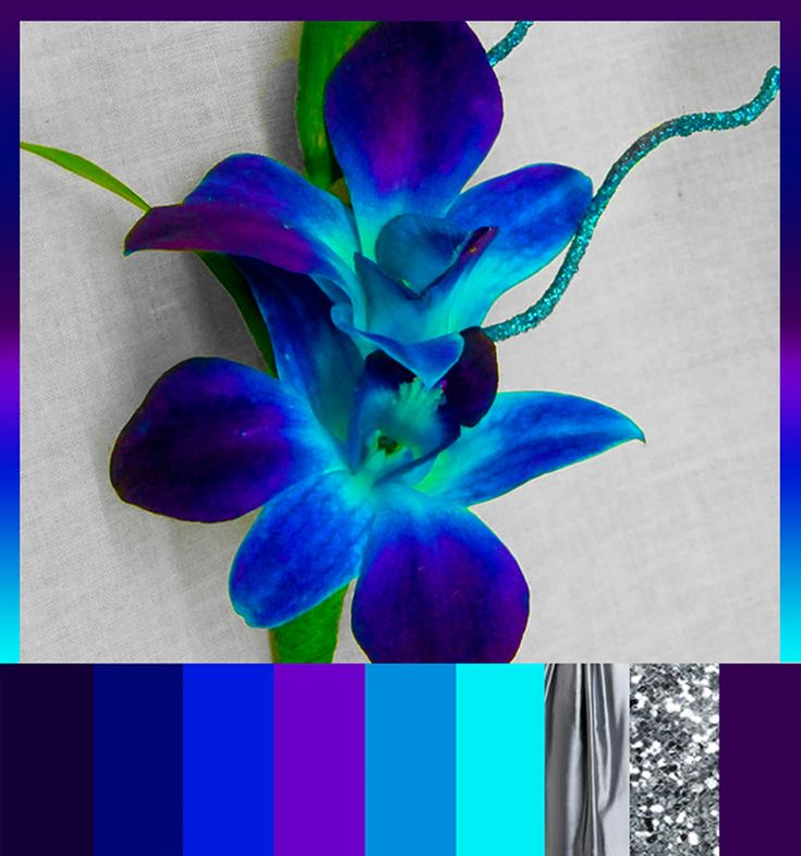 Blue Orchid and silver. (purple and blue and teal and cyan and silver) would b a good palate for room colors
