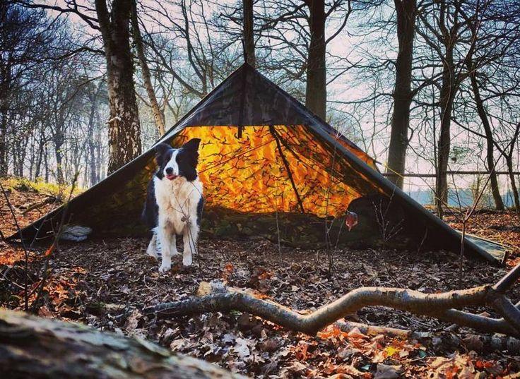 Nice camping setup by @becomingwildman! Show us how you setup your Aqua Quest tarp! #liveyourquest #liveoutdoors #aquaquest #waterproof #tarp #bushcraft #rewildyourlife #survival #camo #camouflage #camping #campingwithdogs