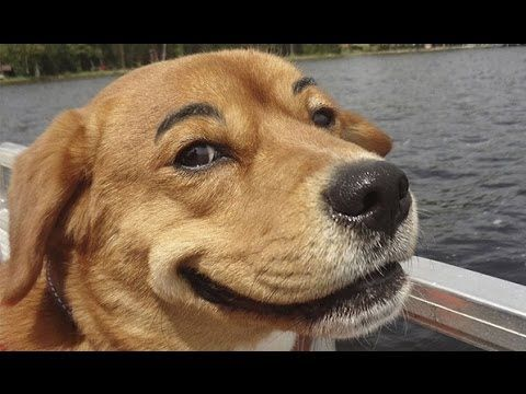 Funny Dogs with Fake Eyebrows Video Compilation 2013 [HD]