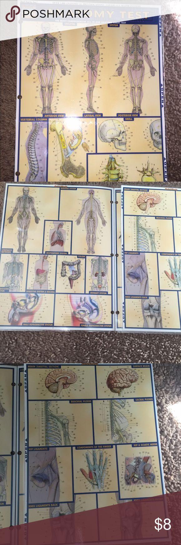 Dorable Medical Anatomy And Physiology Practice Test Patrón ...