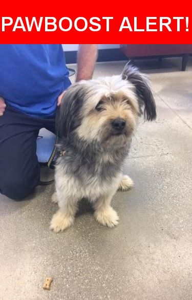 Is this your lost pet? Found in Summit, NJ 07901. Please spread the word so we can find the owner!  AT ST. HUBERT'S IN MADISON 973 377 2295  4/16/17 - Found young adult male on Linden Place, not wearing a collar/tags and not microchipped. Finder said dog just ran up to her on the street. Very friendly and well groomed. Nearby shelters, animal control and police have been notified…