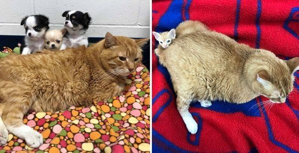 Stray Cat Becomes Vet Nurse And Has Been Helping Animals In Need