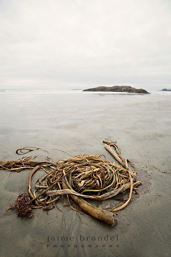 Photography print: photograph, Tofino, beach, sea kelp, nature photography, ocean, fine art print by JaimeBrandelPhoto on Etsy