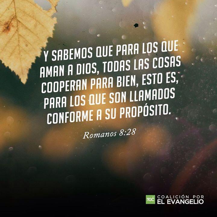 Romanos 8:28 Y sabemos que a los que aman a Dios, todas las cosas les ayudan a bien, esto es, a los que conforme a su propósito son llamados. ♔