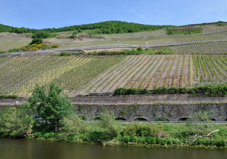 Along the Mosel