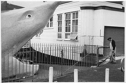 Manly Shark