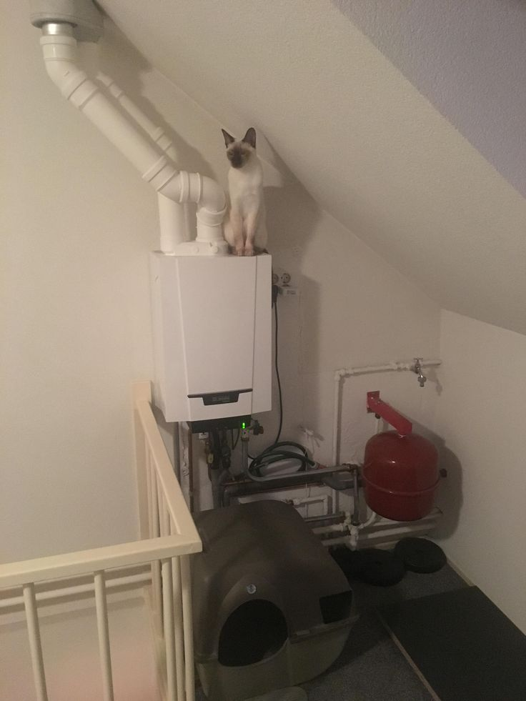 Every morning when I go upstairs to clean the litter box he jumps on the boiler to inspect his minions work.