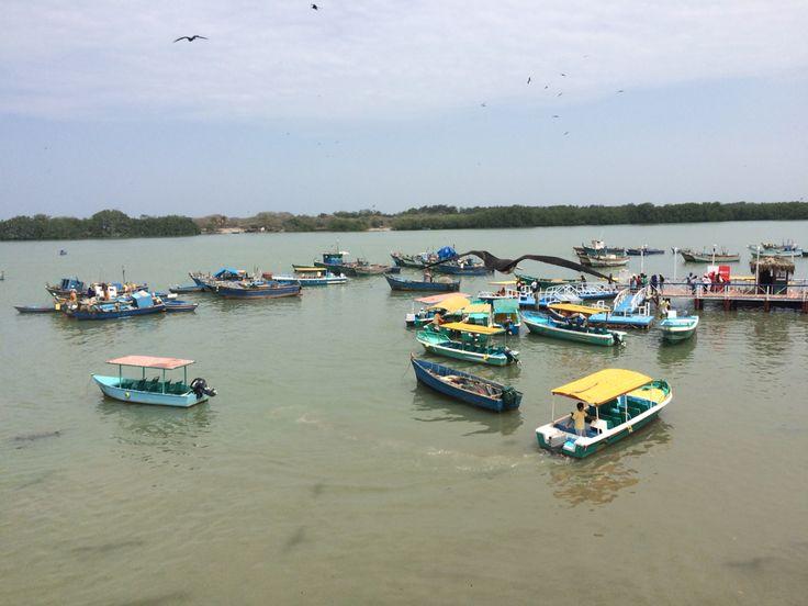 Puerto Pizarro, hogar de los mangles.