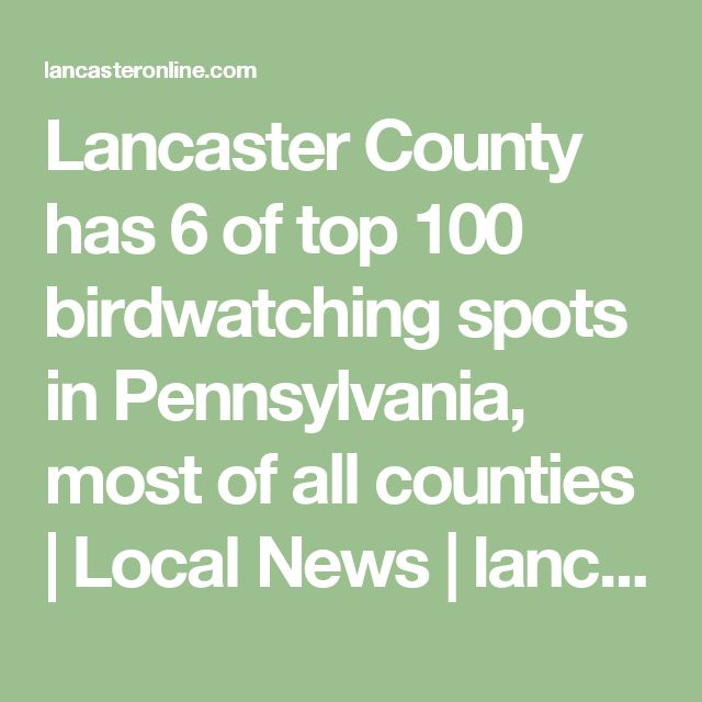 Lancaster County has 6 of top 100 birdwatching spots in Pennsylvania, most of all counties | Local News | lancasteronline.com