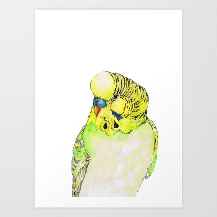 a9d16b92bdbd6 parakeet | Budgie/Parakeet Power!