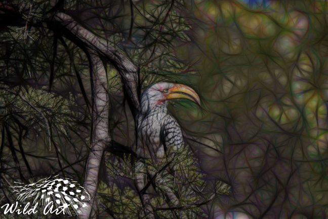 Yellow-billed Hornbill - Wild Art | Wild Art