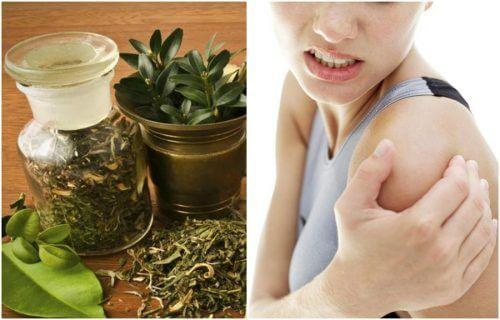 Découvrez la recette de cet alcool à base de plantes, pour soulager vos douleurs articulaires efficacement en un rien de temps.