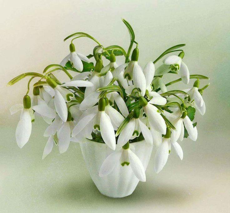 Открытки с днем рождения весенние цветы совету