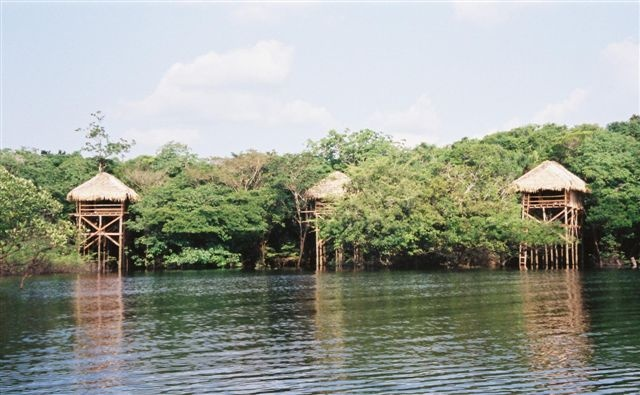 Welcome to Juma Lodge  A jungle lodge totally integrated with the Amazon Rainforest