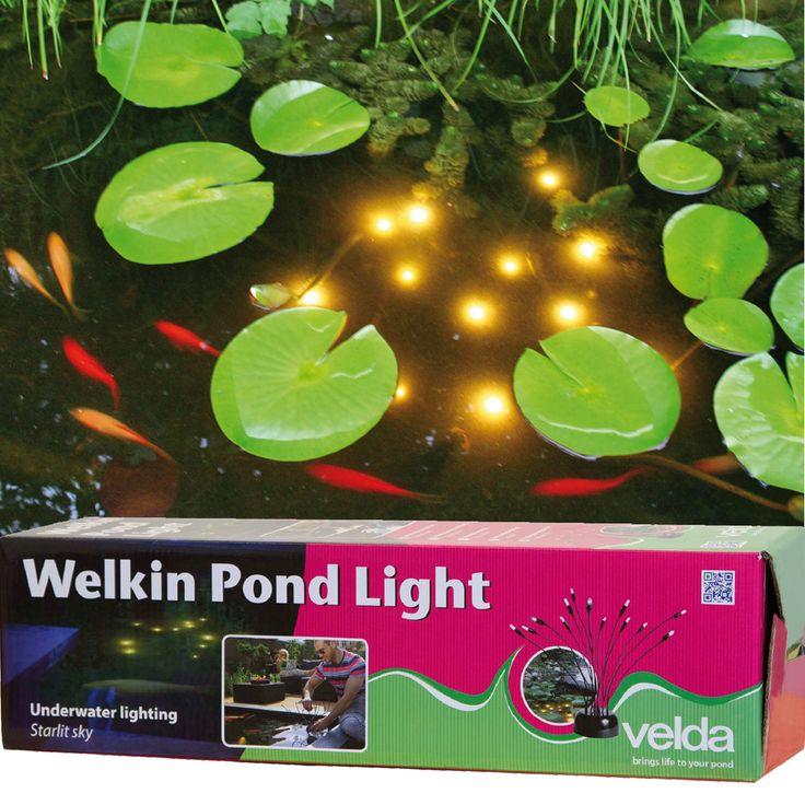 Sfeervolle onderwater verlichting tussen de planten en vissen in de vijver