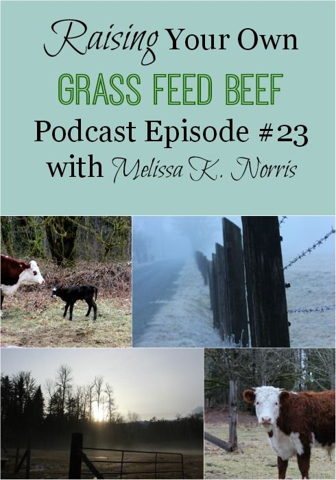 Raising Your Own Grass Fed Beef Podcast Learn tips and what to expect when raising your own beef. Plus, how to raise your own beef without owning land!